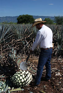 Tequila, México.