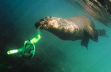 'Haciendo snorkel', vencedora de Hombre y Naturaleza. / Enrique del Campo