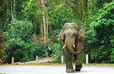 Uno de los elefantes de Khao Yai.