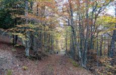 La Pedrosa en otoño. / Luisfer