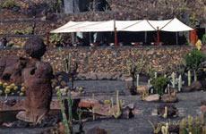 Jardín de cactus.