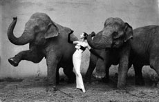 Dovina with Elephants, por Richard Avendon
